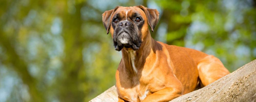 Partnervermittlung mit hund
