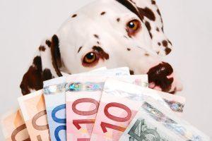 Dalmatiner hinter Geldfächer