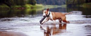 Fremdkörper wie Holzsplitter verschlucken Hunde gern.