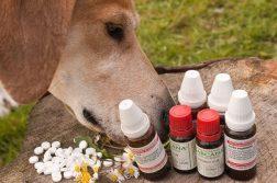 Alternative Heilmethoden beim Hund