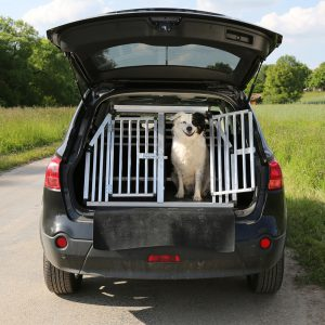 Hund in einer Transportbox im Auto