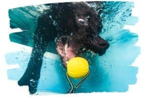 Hund taucht nach Spielzeug, Foto unter Wasser