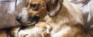 Freundschaft Hund Katze