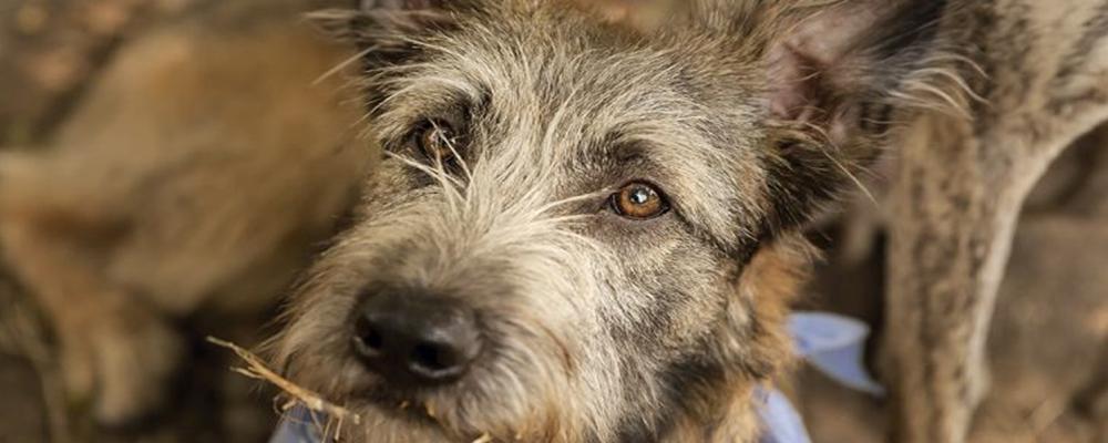 Disney Hunde Im Portrait Bloodhound Cocker Mischling Der Hund