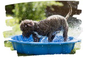 Hund spielt in Wasserbecken