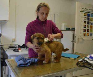 Hund im Tierheim Pflege
