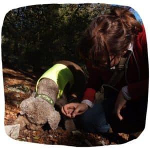 Hund bei Trüffelsuche