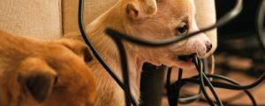Stromunfall mit Hund