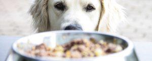 Allergien und Unverträglichkeiten bei Hunden