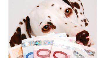 Dalmatiner hinter Geldfaecher