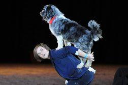 DOGLIVE - Hund auf Ruecken