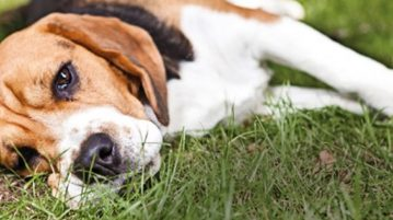 Ernährung chronisch kranker Hunde
