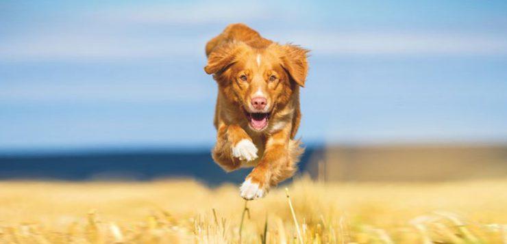 Hunde richtig ernähren bei Gelenkproblemen