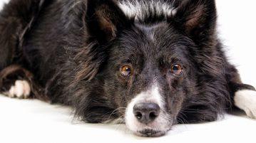 Ernährung von Hundesenioren