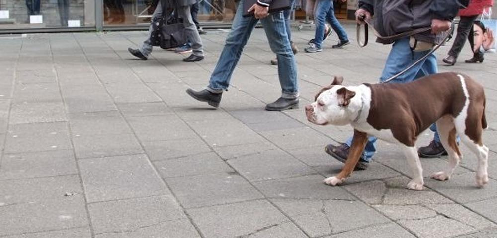 Frei Schnauze Doch Nicht Leinenlos Der Hund