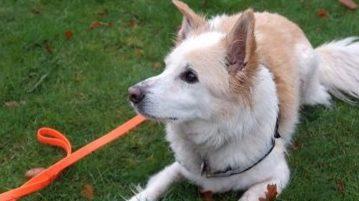 Giftköder-Suchhund