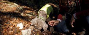 Hund auf Trüffelsuche