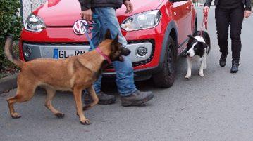 Angstbeisser Hund
