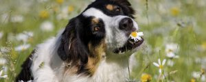 Pflanzheilkunde Hund