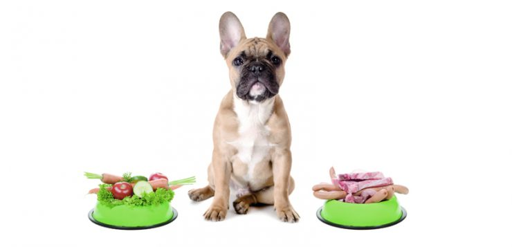 Futtermittelallergie Juckreiz Hund