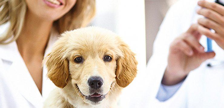 Impfungen fuer Hunden