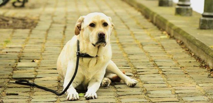 Muskelschwäche beim Hund