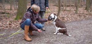 Hund ohne Maulkorb