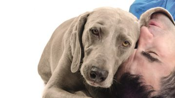 Hund Mensch Kopf an Kopf