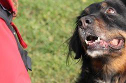 Hund sieht Mensch an