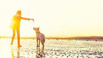 Reisen mit Hund: spielen am Strand