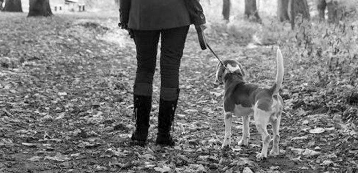 Mensch mit Hund im Wald