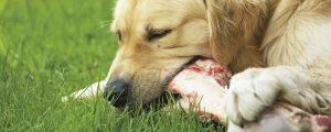 Hunde Ernährung Barfen