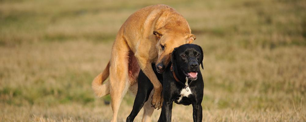 Sexualität Des Hundes Spitz Wie Nachbars Lumpi Der Hund