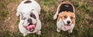 Hunde warten auf Belohnung