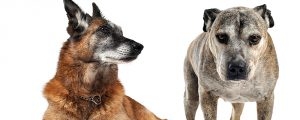 Alte Hunden