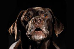 klaeffender Hund