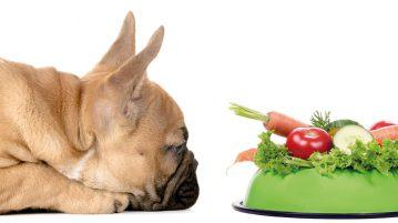 krebskranke Hunde gesund ernähren
