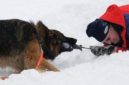 Lawinenhunde Rettungshunde