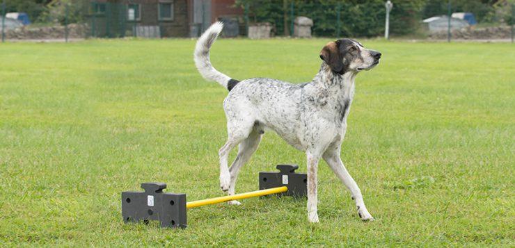 Mobility Hundesport