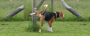 Pinkelpausen Hund markieren