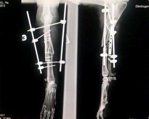 Röntgenbild Hund