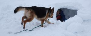 Schäferhund läuft zu Mann im Schnee