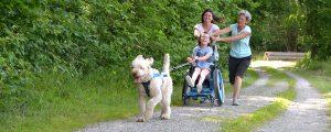 Therapiehund zieht Rollstuhlfahrerin