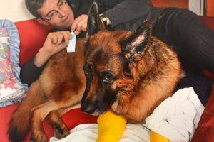 Hund mit eingegipsten Beinen