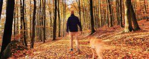 Herbsttouren mit Hund
