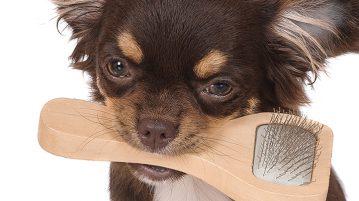 Fell und Koerperpflege beim Hund