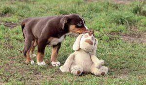 Welpe mit Stoffhund