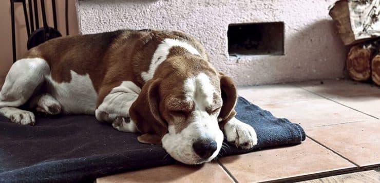 Hunde mit einer Erkältung sollten sich schonen