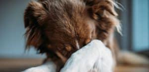 Es gibt viele Ursachen, warum ein Hund nervös oder angstvoll ist