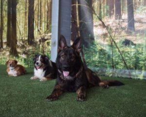 Hunde bei Bellomania